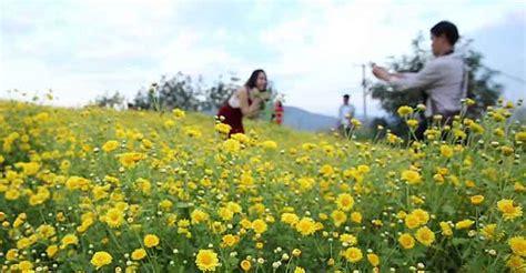 Bibit Bunga Matahari Di Jogja wisata jogja cangkringan sleman akan dipercantik taman