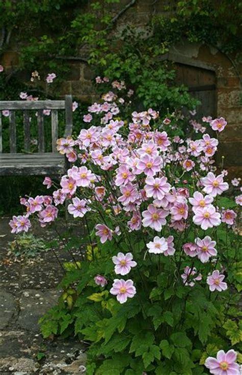 pink flower garden 17 best ideas about japanese garden plants on