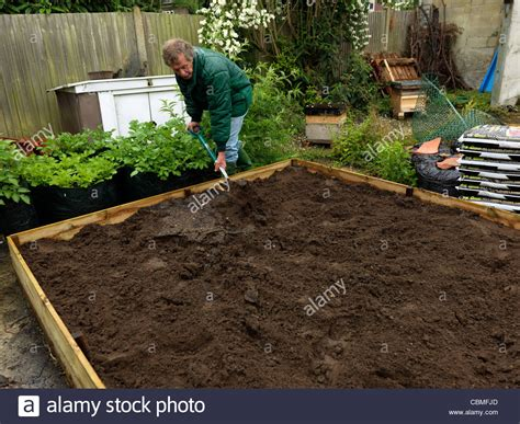 raised bed soil man mixing the soil in the raised bed in garden surrey england stock photo royalty