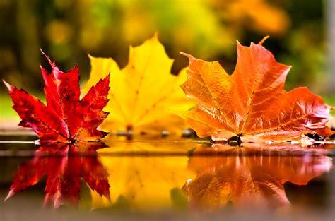 november images november jak s view of vancouver v 3