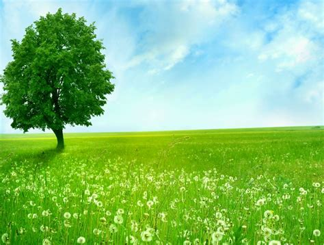 wallpaper green tree green tree wallpaper wallpaperyork brows your