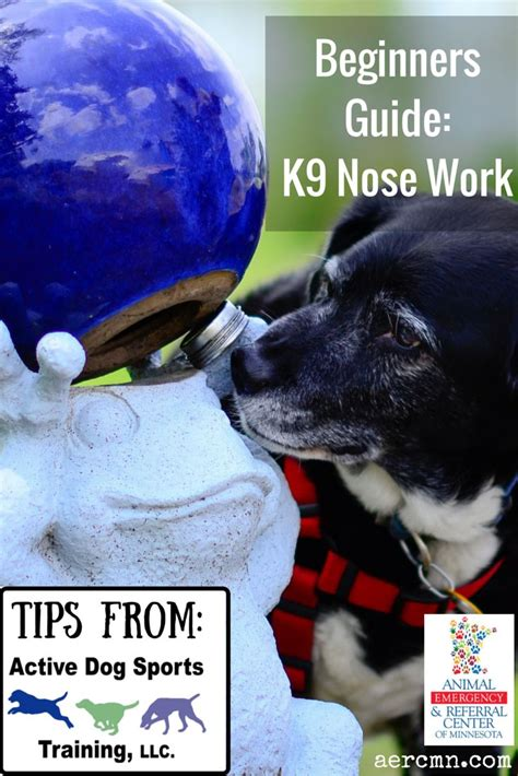 Nosework For Dogs 2nd Ed 1000 images about pets nosework on