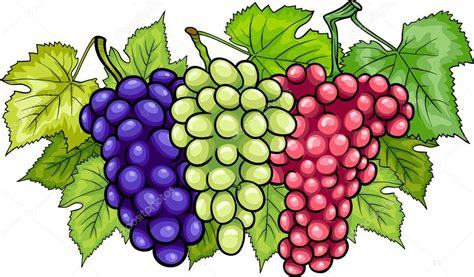 imagenes de uvas en dibujos animados racimos de uvas de dibujos animados ilustraci 243 n vector