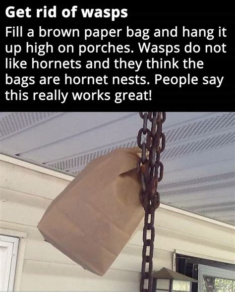 how to get rid of wasps in backyard 1000 ideas about getting rid of bees on pinterest bee