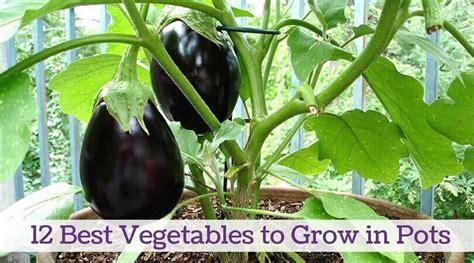 vegetables  grow  pots home gardeners