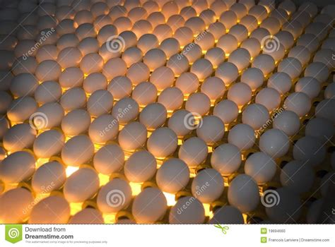 the egg factory order eggs egg factory quality by candling stock photo