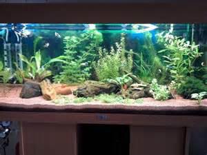 mod 232 le d 233 cor fond aquarium