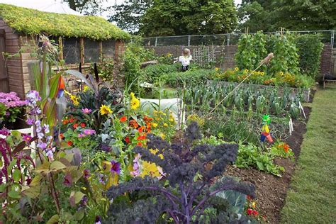 Types Of Garden Fencing - allotments how get the best from your plot rhs gardening