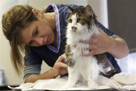 cat hair matted fur causes how to remove matted cat hair