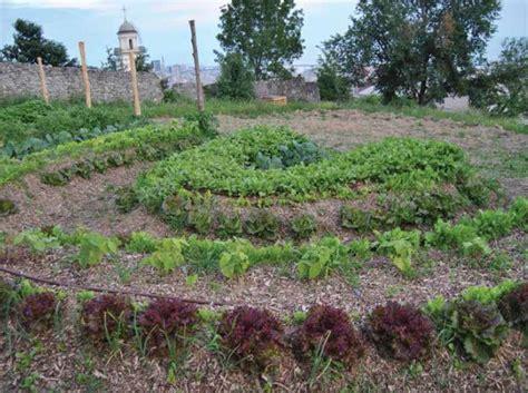 giardino sinergico l orto sinergico le origini l esperienza la pratica