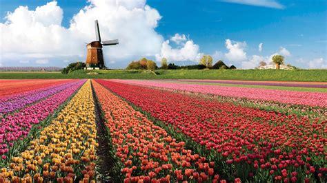 netherlands tulip fields park keukenhof netherlands feel the planet