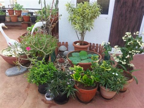 terrace garden ideas terrace gardening indian homes pinte