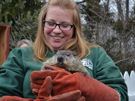 groundhog day turtle back zoo essex ed predicts early patch