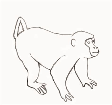 Outline Of A Monkey by Monkey Outline Az Coloring Pages