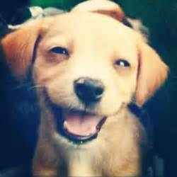 puppy smiling smiling dogs picture