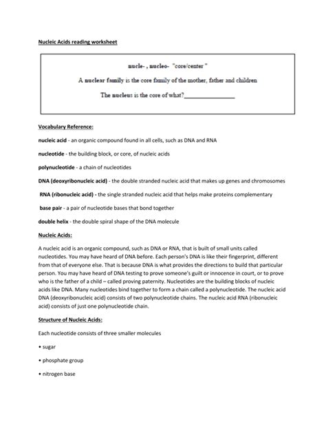nucleic acids worksheet nucleic acids worksheet the large and most comprehensive worksheets