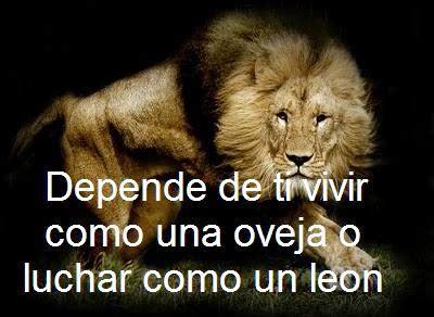imagenes de leones con frases imagui imagenes lindas para compartir fb imagenes de leones con