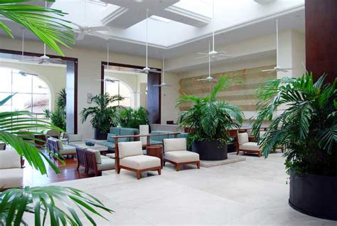 hotel plant layout six common mistakes you re making with your indoor plants