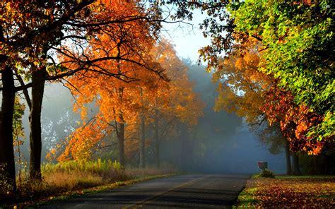 landscape nature tree forest woods autumn road path