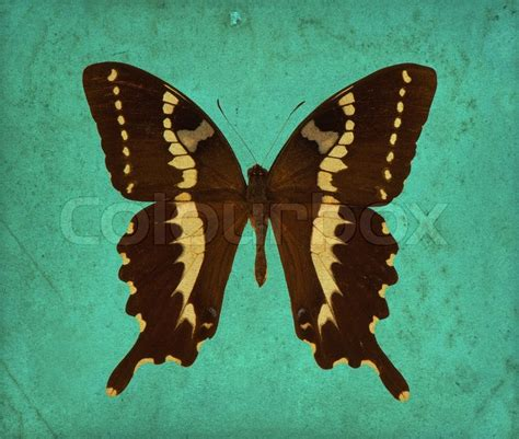 Butterfly over antique wallpaper grunge background   Stock
