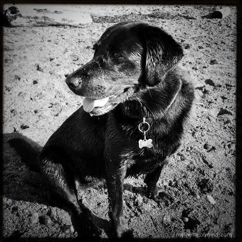 black and white animals black and white animals heidi northwest frame of mind