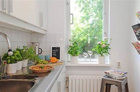 plants in kitchen a kitchen garden fresh herbs made easy who s green