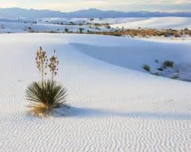 sahara desert snow in 1979 snow fell in the sahara desert pics