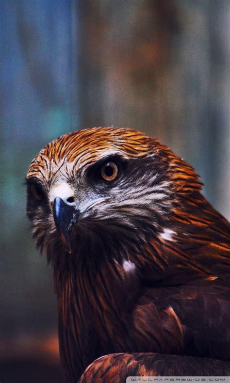eagle  hd desktop wallpaper   ultra hd tv wide