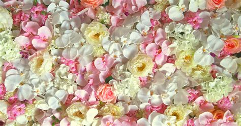 Wedding Backdrop Melbourne by Wedding Backdrops And Flower Wall Melbourne Affordable