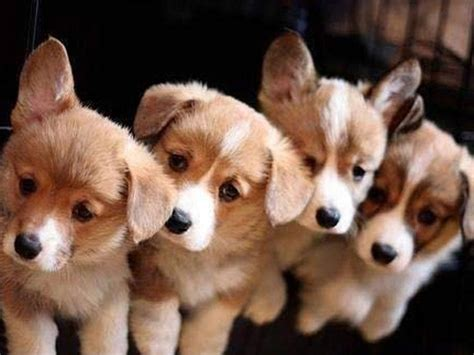pups gratis free puppy dog wallpaper android apps p 229 google play
