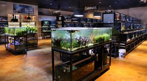 puppy store houston 17 best images about houston store on it cichlids and we
