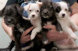 rescued puppies animal lover hart rescues puppies after car with daily mail