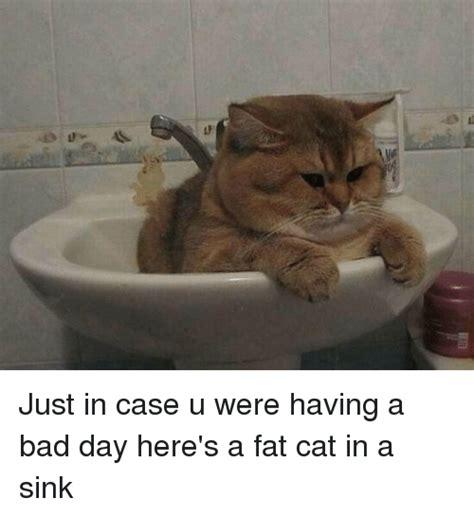 Funny Fat Cat Memes - just in case u were having a bad day here s a fat cat in a