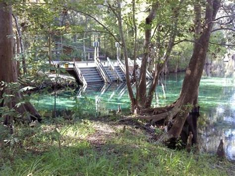 Ginnie Springs Cabin Rentals by Ginnie Springs Tent Site Picture Of Ginnie Springs High