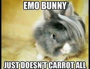 Bunny Meme - emo bunny just doesnt carrot all memes