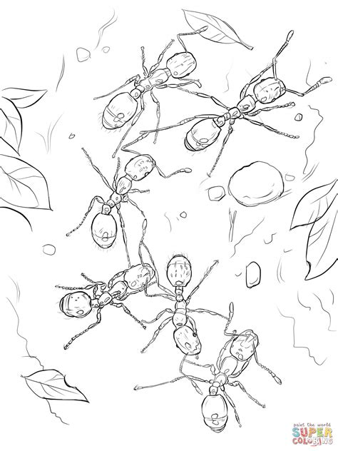 queen ant coloring page leaf cutter ant coloring page pages ants grig3 org