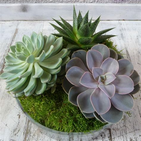 Whats New At The Succulent by New 201 Succulent Plant Shop Uk Succulent Plants