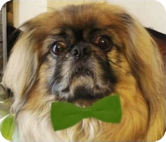 puppies for adoption in wv kato wv adopted wv111311 beckley wv pekingese