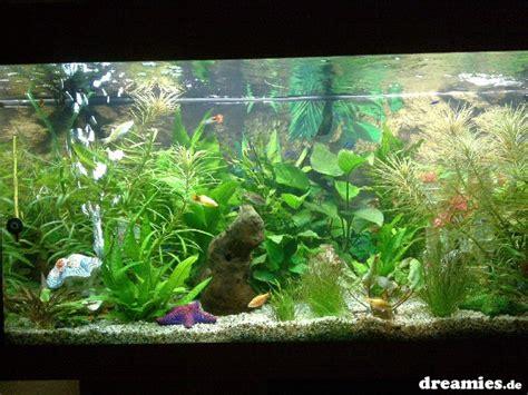 wann treten erste schwangerschaftssymptome auf einlaufphase wann der erste wasserwechsel aquarium forum