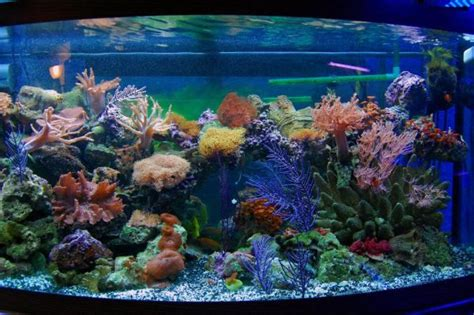beautiful home fish tanks 28 modern fish tanks that inspire relaxation