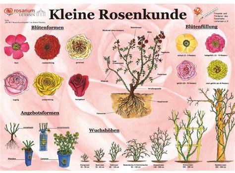Welche Rosensorten Gibt Es 3544 by Kleine Rosenkunde Rosarium Uetersen