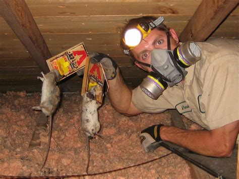 orlando rodent control extermination removal