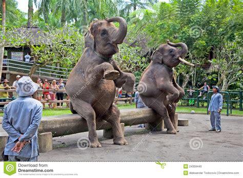 Stelan Bali 9 zwei elefanten stellen bali indonesien dar