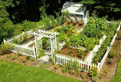 How To Grow A Vegetable Garden From Garbage Humans Are Free Beautiful Vegetable Garden Pictures