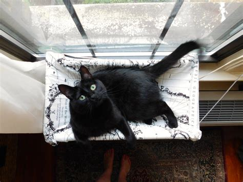 cat hammock bed cat hammock bed shelves nealasher chair the important