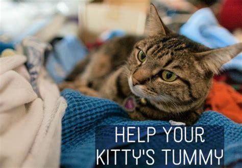 how to comfort a sick cat how to comfort a sick cat 28 images russel the cat