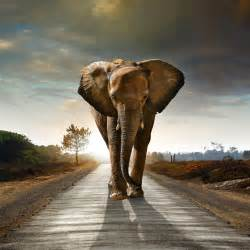 wall images hd elephant wallpapers hd pictures one hd wallpaper pictures backgrounds free download