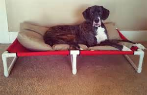 great dane bed breeds picture