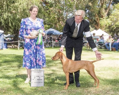 Best Sweepstakes 2014 - fire mountain vizslas southern california vizsla breeder
