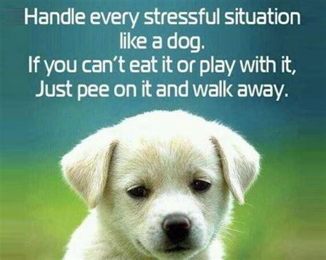 puppy quotes 28 quotes spartadog